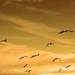 birds in sky - life